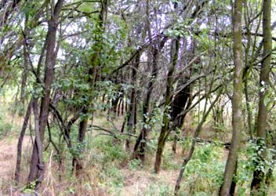 Dzsungelgyümölcsös